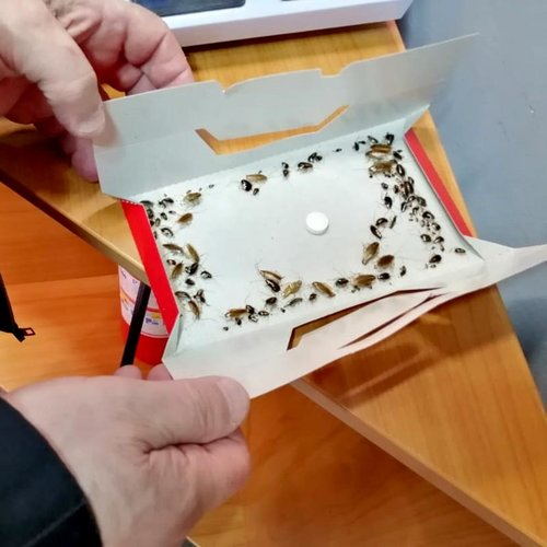 Клеевая ловушка с приманкой от тараканов Форсайт (Форс-сайт), 5шт