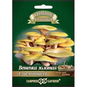 Мицелий грибов Вешенка золотая Лимонная
