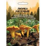 Мицелий грибов Лисичка настоящая