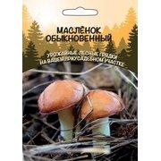 Мицелий грибов Маслёнок Обыкновенный