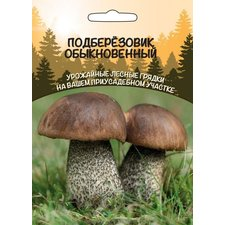 Мицелий грибов Подберёзовик Обыкновенный