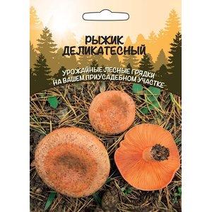 Мицелий грибов Рыжик деликатесный