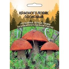 Мицелий грибов Красноголовик Сосновый