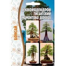 Семена Секвойядендрон гигантский (Мамонтово дерево) Бонсай, 5 сем.