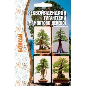 Семена Секвойядендрон гигантский (Мамонтово дерево), 5 сем.