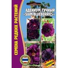 Семена цветов Адениум тучный Siam blueberries, 3 сем.