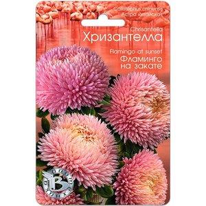 Семена цветов Астра китайская Хризантелла Фламинго на закате, 40 сем.