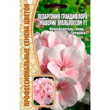 Семена цветов Пеларгония Грандифлора Маверик Эпплблоссом F1, 3 сем.