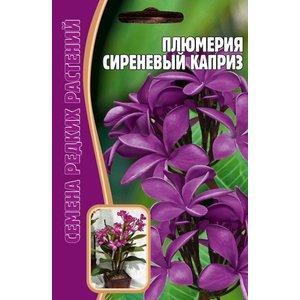 Семена цветов Плюмерия Сиреневый каприз, 3 сем.