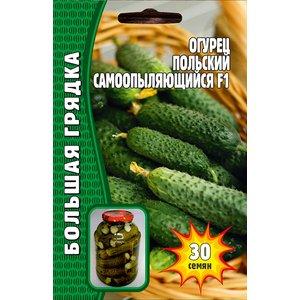 Семена Огурец Польский самоопыляющийся F1, 30 сем.