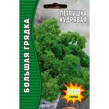 Семена Петрушка Кудрявая, 5000 сем.