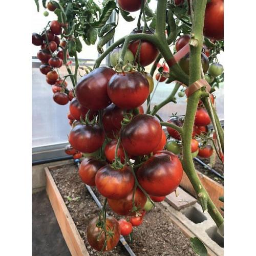 Семена томат Партнер Черная богиня, 0.1г