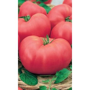 Семена томат Розовый слон, 0.1гр