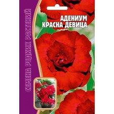 Семена цветов Адениум Красна девица, 3 шт.