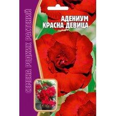 Семена Адениум Красна девица, 3 шт.