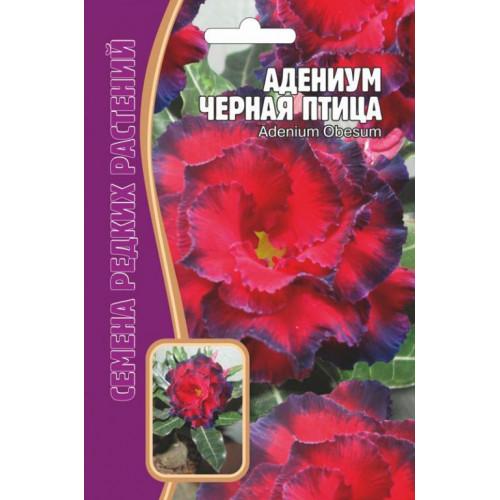 Семена Адениум Черная птица, 3 шт.